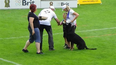 berry the black german shepherd black berry german shepherds puppies