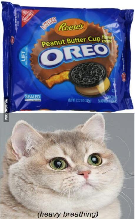 Oreo Memes - 1000 images about heavy breathing on pinterest heavy breathing cat memes and cats