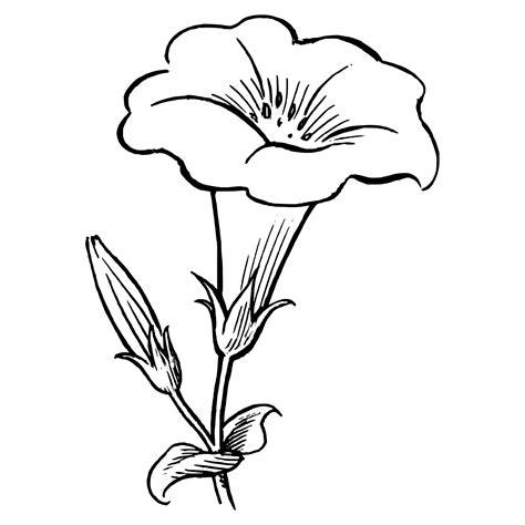 imagenes infantiles para colorear de flores imagenes de flores para dibujar