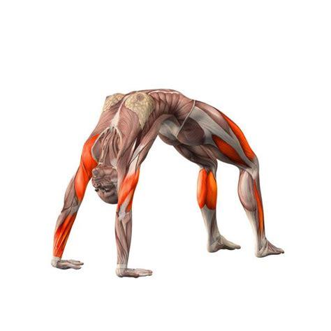 upward bow pose upward bow pose urdhva dhanurasana yoga poses yoga