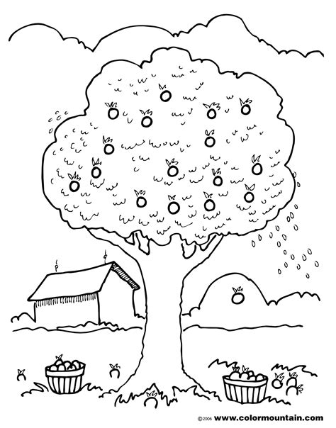 apple orchard coloring page le orchard colouring pages apple coloring coloriong page