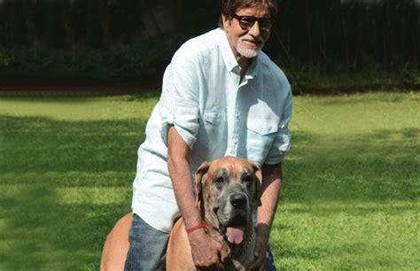 indian celebrities  love pets