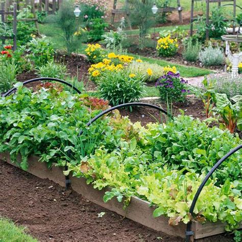 fall vegetable gardening - Fall Vegetables Garden