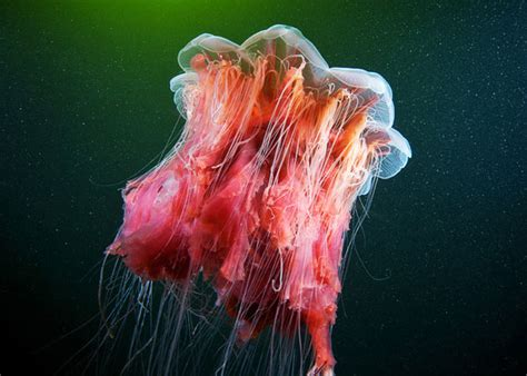 Beautiful Monsters beautiful monsters from the white sea by semenov