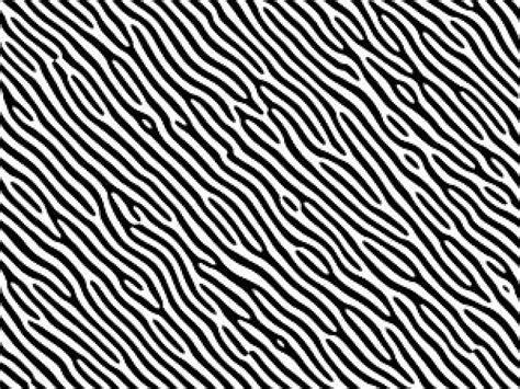 foto zebra design zebra print descargar fotos gratis