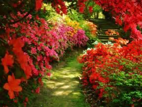 garten blumen garden flowers flowers photo 32600572 fanpop