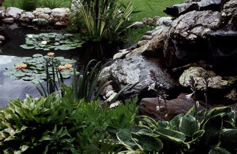pond gallery desert water gardens