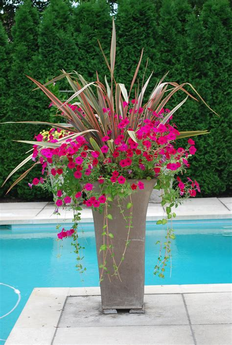 poolside planter container gardens