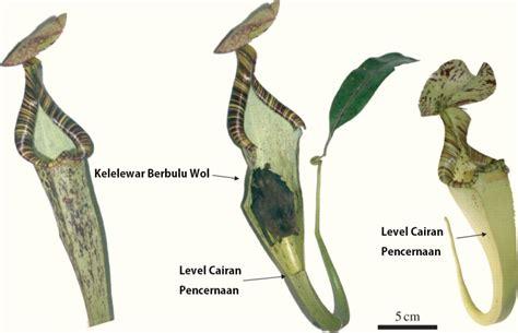 Raflesia Madu 15 contoh simbiosis mutualisme beserta gambar dan