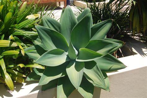 jenis tanaman hias daun  suasana rumah lebih hidup