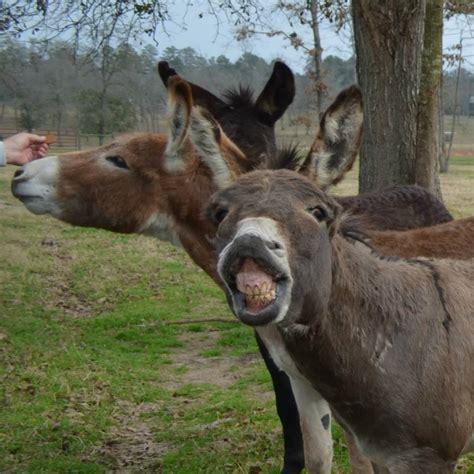 burro cojiendo pony papas y hijos cojiendo sh 1314 burros cojiendo burras y