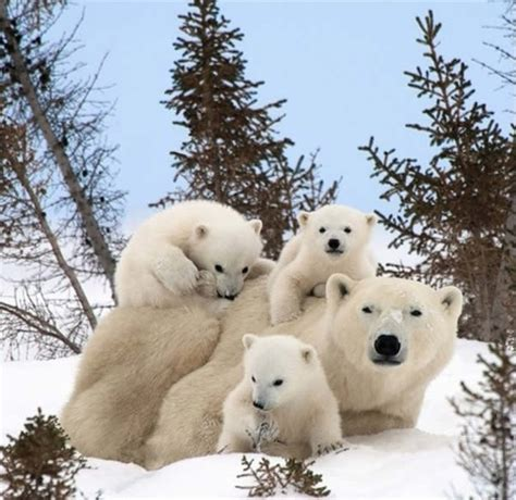 most adorable animals cute baby animals surrounded by love 18 most adorable