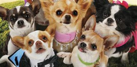 beverly puppies beverly chihuahua 3 puppies names www pixshark images galleries with a bite