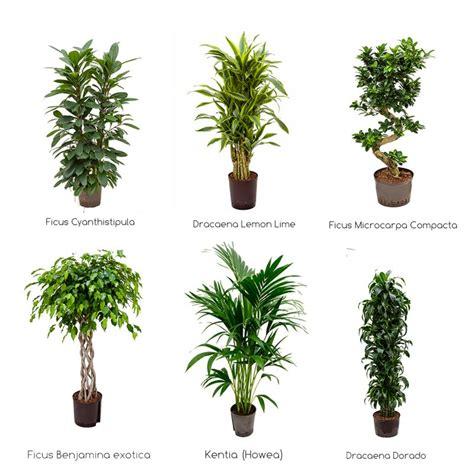 pflanzen kaufen b 252 ropflanzen hydrokultur zimmerpflanzen gr 252 npflanzen kaufen
