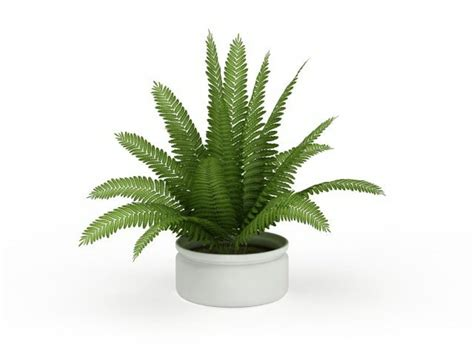 boston fern indoor plant in the white pot stunning indoor plants boston fern house plant 3d model 3ds max files free