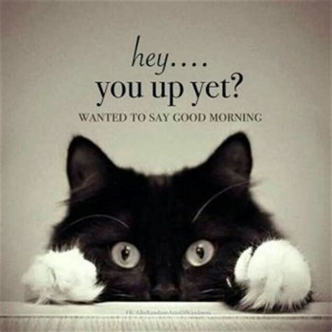 Good Meme Cat - funny cute silly good morning memes
