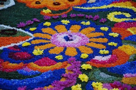 co di fior mostre di fiori e piante di giugno codiferro master