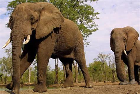 fotos animales mamiferos fotos de animales mamiferos
