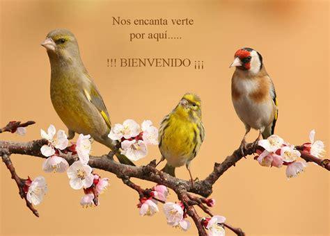 aves de espaa 849418928x vivir pajareando aves de espa 209 a