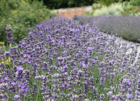 the 5 best hedging plants for borders best4hedging