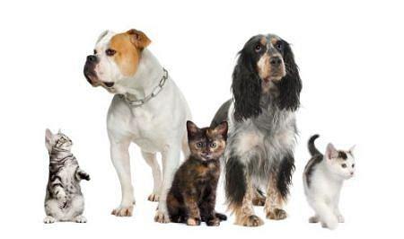 animal companions pets and social change in eighteenth century britain animalibus books przenoszenie chor 243 b przez zwierz苹ta domowe