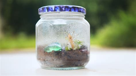 bug terrarium  steps  pictures