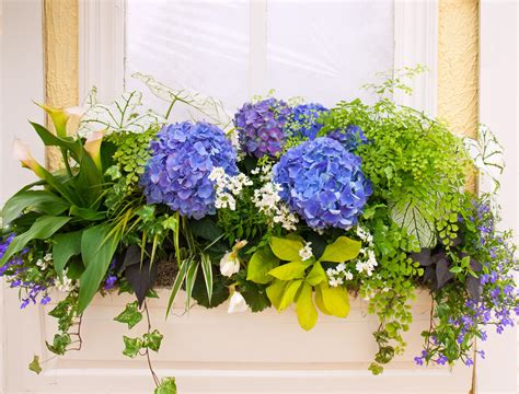 You Put The Flowers In The Vase 25 Hydrangea Flower Pot And Planter Arrangements Photos