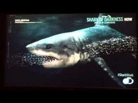 submarine shark attacks woman submarine shark attack caught on video doovi
