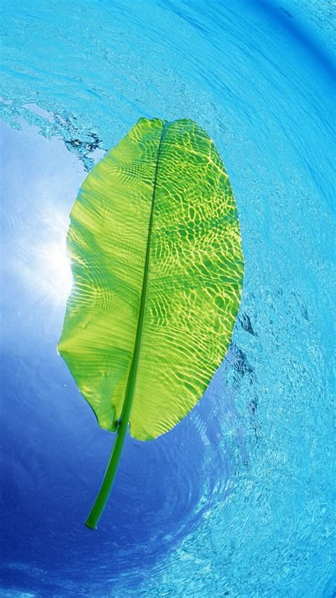 blue water green leaf iphone  wallpaper hd