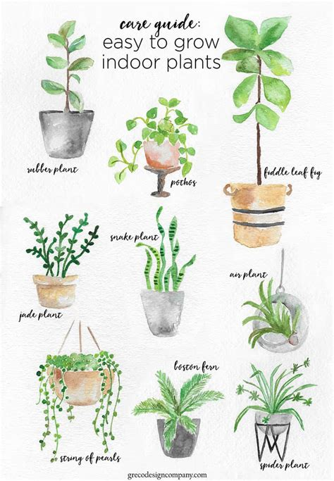 easy to care for indoor plants a guide to caring for easy to grow indoor plants
