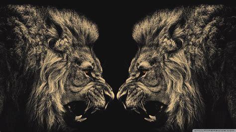 lion wallpaper  ipad  hd  ipad apps