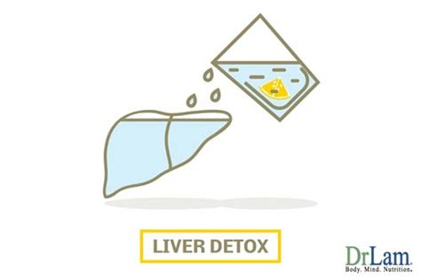 Liver Detox Symptoms Fatigue by Liver Detox Symptoms That Might Shock And And