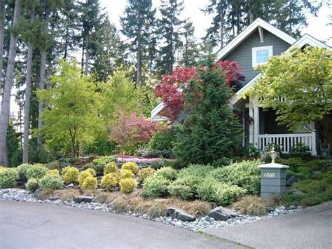 nice small evergreen trees for landscaping 6 small low maintenance evergreen shrubs newsonair org