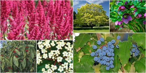 piante da giardino resistenti al gelo 10 piante da esterno e tipi di fiori resistenti al freddo