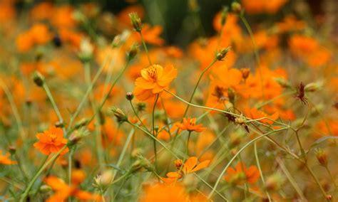 beautiful autumn garden flowers a special flowers