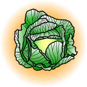 Image cabbage food clip art christart com
