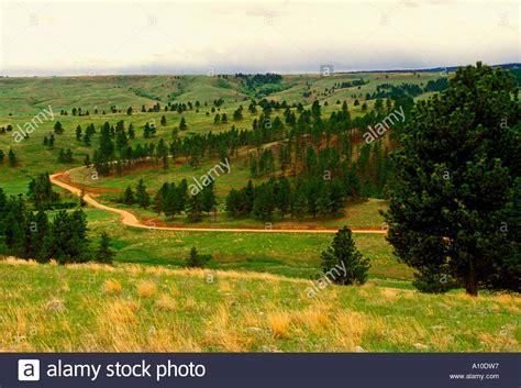south dakota landscape landscape custer state park black south dakota