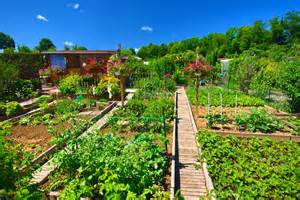 comment r 233 ussir 224 cultiver jardin potager en s amusant