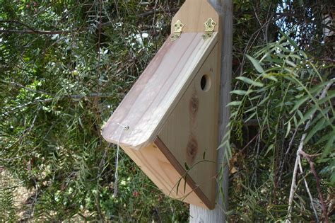 finch houses finch birdhouse plans free