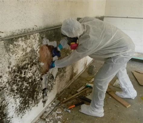 How To Prevent Mold how to prevent mold in closets and walls