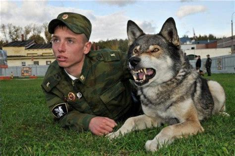 the feral irishman world s most secure house a zombie bunker the feral irishman the wolf dog hybrids bred to defend