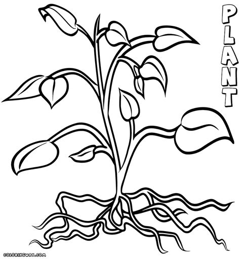 plant with roots coloring page coloring pages