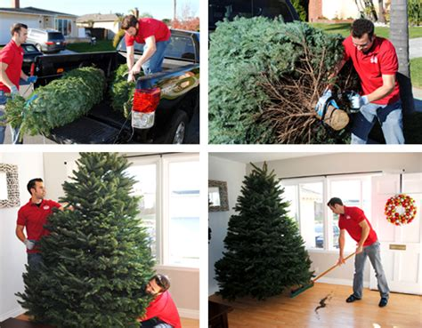 christmas tree delivery chistmastree2you com
