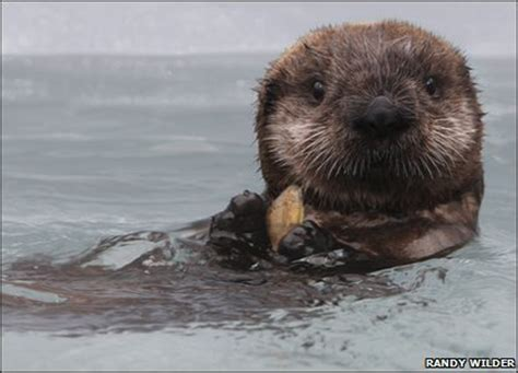 cbbc newsround in pics the cutest baby animals from
