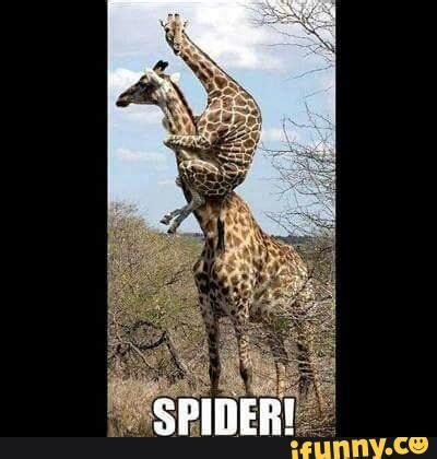 Giraffe Spider Meme - animals ifunny