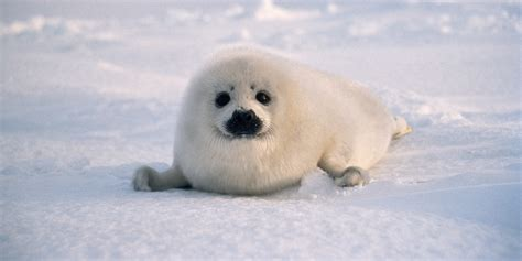 puppy pulls out his best seal impression