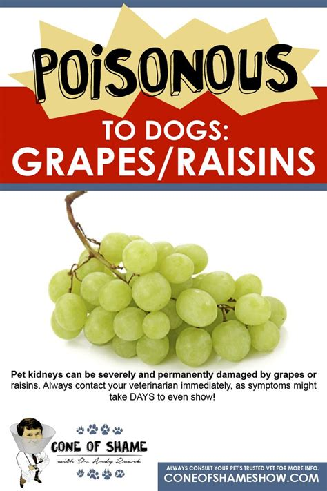 are grapes poisonous to dogs 17 best images about cone of shame on for dogs
