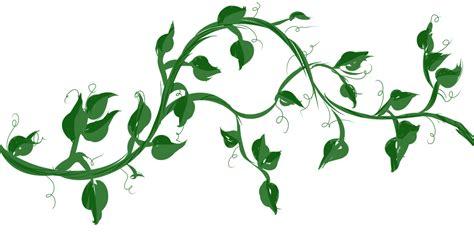 houseplant vine operation a c o r n weekly update 4 16 2013