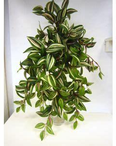 bonsai interieur jardiland achetez votre plante d int 233 rieur sur jardiland
