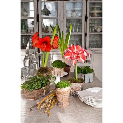 fiori invernali per giardino 35 piccoli giardini invernali logos libri it